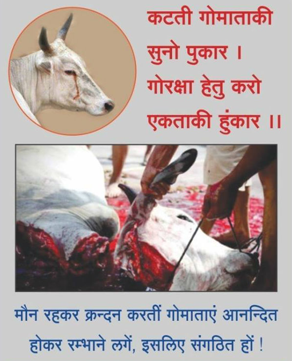 cow_slaughter1
