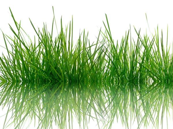 27-1422362710-14-1376486123-grass