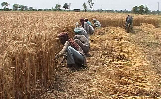 farmers-punjab_650x400_41428933657